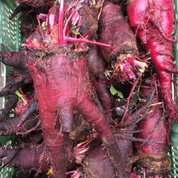 The Meatroot